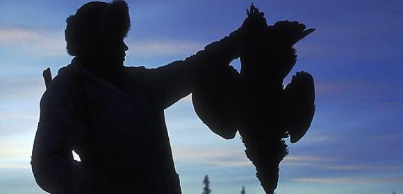 Jakt på toppfågel Kolgården